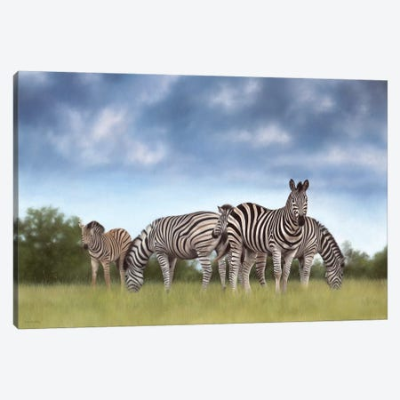 Zebras Canvas Print #SLG36} by Rachel Stribbling Canvas Artwork