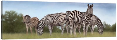 Zebras Panoramic Canvas Art Print