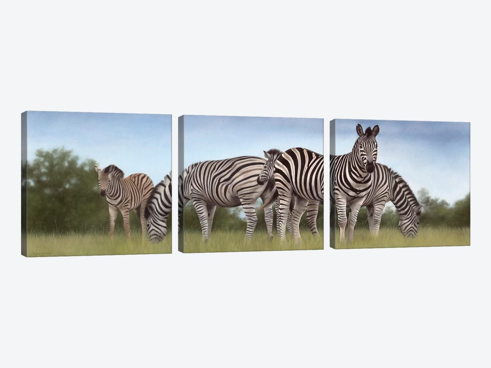 Zebras Panoramic by Rachel Stribbling 3-piece Canvas Art