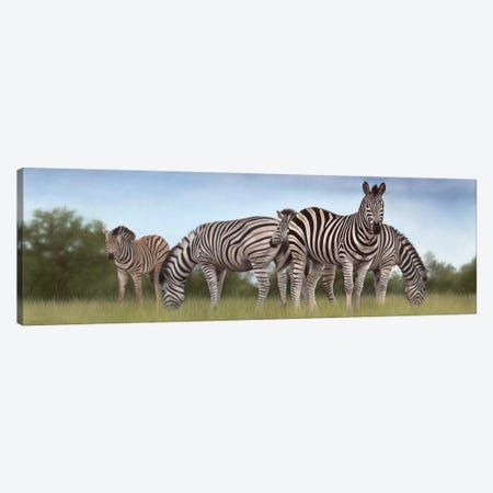 Zebras Panoramic Canvas Print #SLG37} by Rachel Stribbling Canvas Artwork
