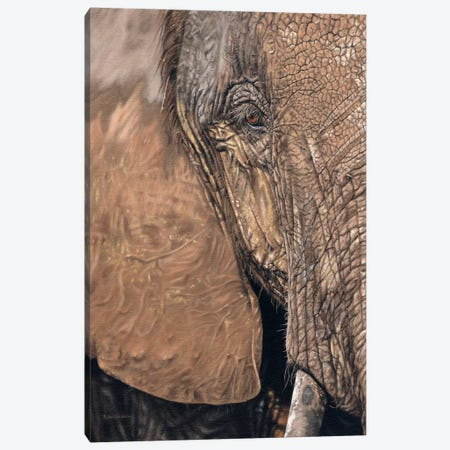 African Elephant Face Canvas Print #SLG3} by Rachel Stribbling Canvas Art Print
