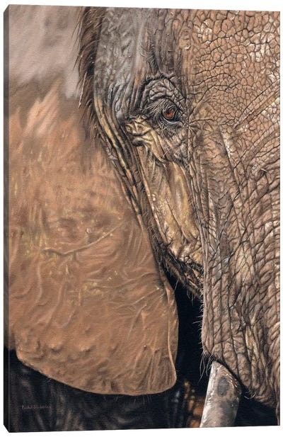 African Elephant Face Canvas Art Print
