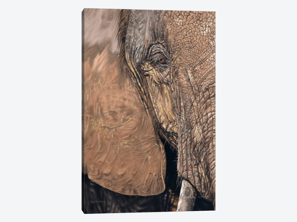 African Elephant Face by Rachel Stribbling 1-piece Canvas Art Print