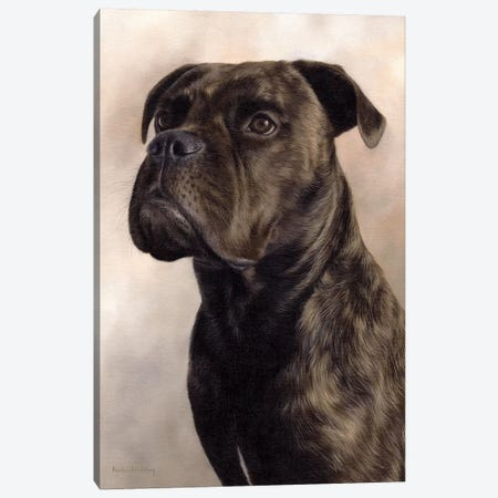 Boxer-Bullmastiff Canvas Print #SLG40} by Rachel Stribbling Canvas Artwork