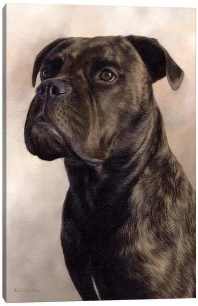 Boxer-Bullmastiff Canvas Art Print