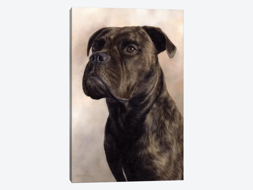 Boxer-Bullmastiff by Rachel Stribbling 1-piece Canvas Artwork