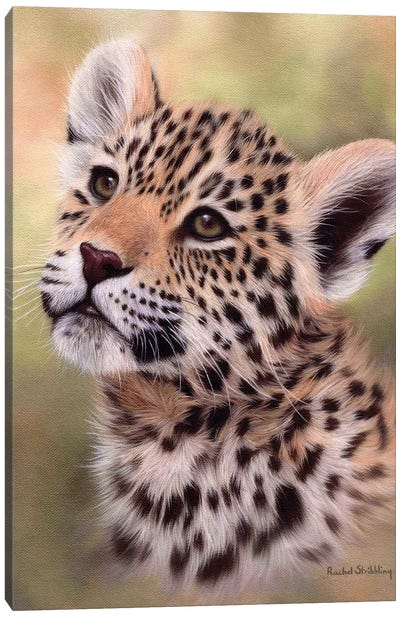Jaguar Cub Canvas Art Print