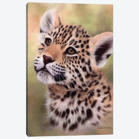 Jaguar Cub 3-Piece Canvas #SLG44} by Rachel Stribbling Canvas Print