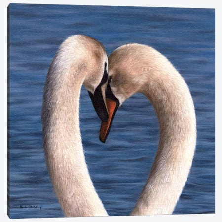 Mute Swans Canvas Print #SLG46} by Rachel Stribbling Canvas Art Print