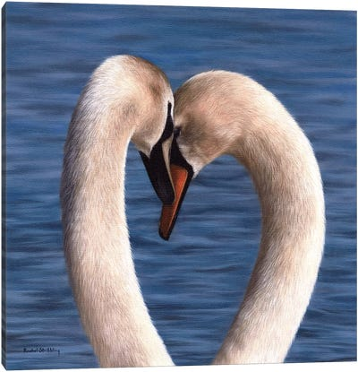 Mute Swans Canvas Art Print