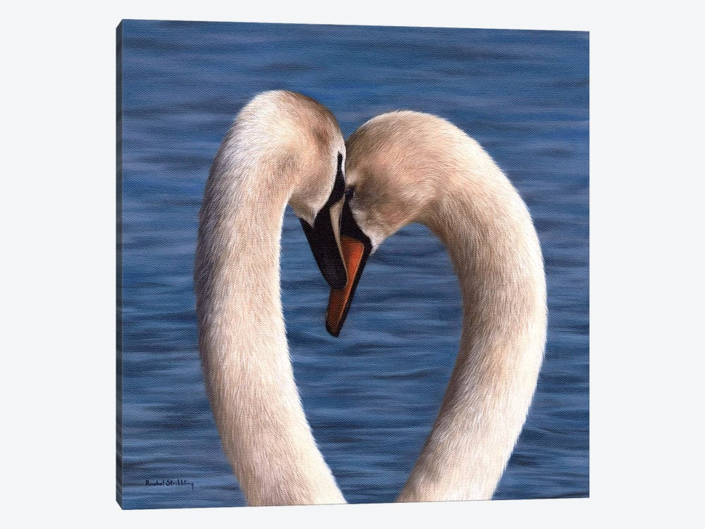 Mute Swans by Rachel Stribbling 1-piece Canvas Artwork