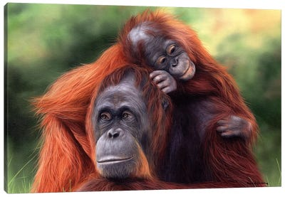 Orangutans Canvas Art Print