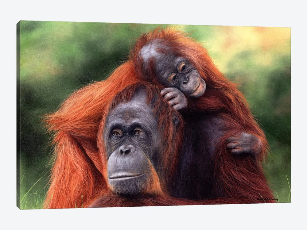 Orangutans by Rachel Stribbling 1-piece Canvas Art Print