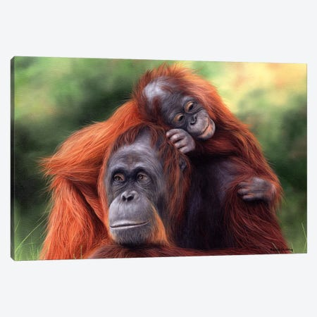 Orangutans Canvas Print #SLG47} by Rachel Stribbling Canvas Print