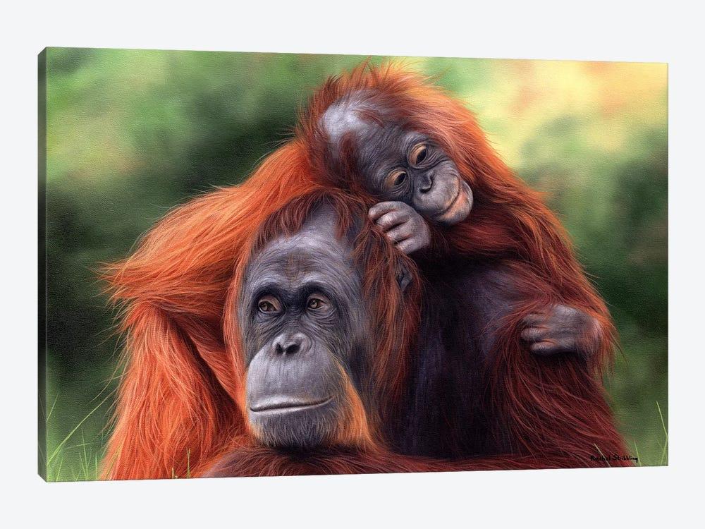 Orangutans by Rachel Stribbling 1-piece Canvas Art Print