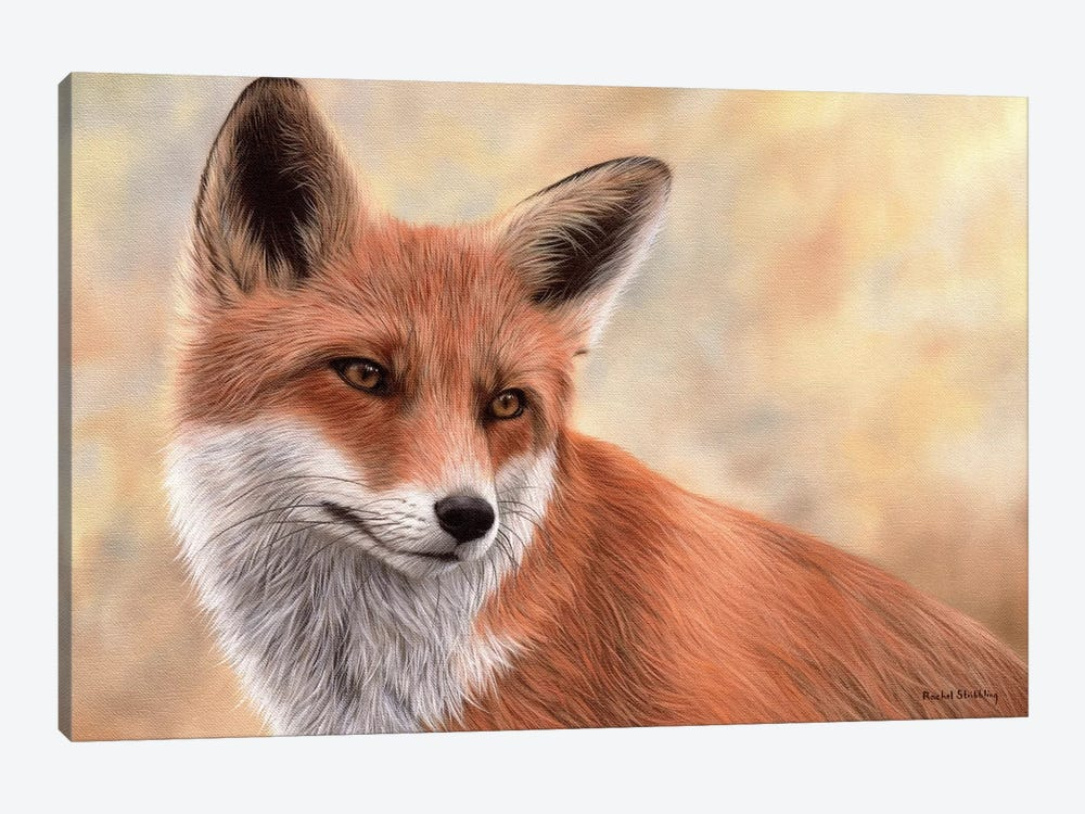 Red Fox by Rachel Stribbling 1-piece Canvas Art