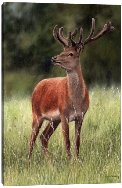 Red Stag Canvas Art Print