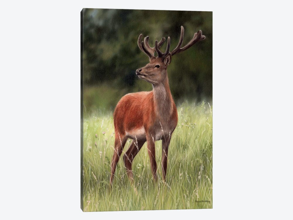 Red Stag by Rachel Stribbling 1-piece Canvas Print