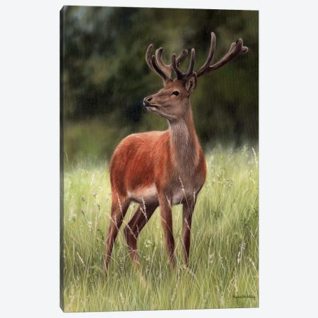 Red Stag Canvas Print #SLG49} by Rachel Stribbling Canvas Artwork