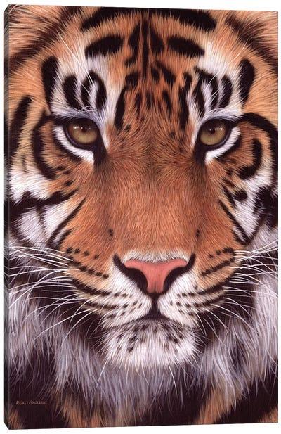 Sumatran Tiger Canvas Art Print