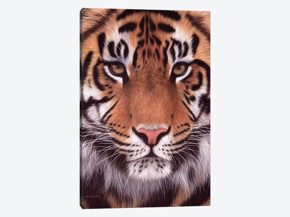Sumatran Tiger by Rachel Stribbling 1-piece Canvas Print