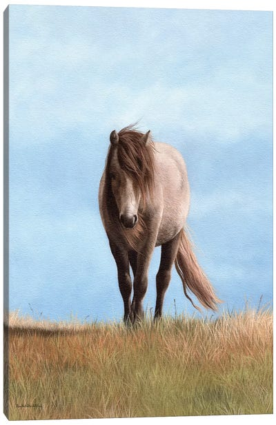 Welsh Pony Canvas Art Print