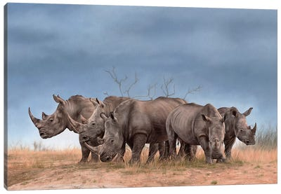 White Rhinos Canvas Art Print