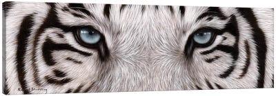 White Tiger Eyes Canvas Art Print