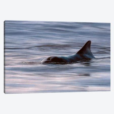 Wild Bottlenose Dolphin At Sunrise Canvas Print #SLG55} by Rachel Stribbling Canvas Artwork