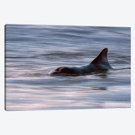 Wild Bottlenose Dolphin At Sunrise Canvas Print #SLG55} by Rachel Stribbling Canvas Artwork