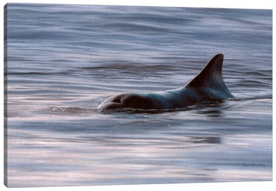 Wild Bottlenose Dolphin At Sunrise Canvas Art Print