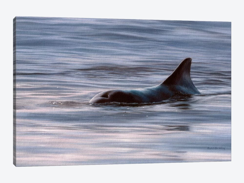 Wild Bottlenose Dolphin At Sunrise by Rachel Stribbling 1-piece Canvas Artwork