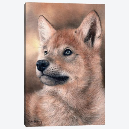 Wolf Pup Canvas Print #SLG56} by Rachel Stribbling Canvas Artwork