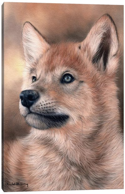Wolf Pup Canvas Art Print