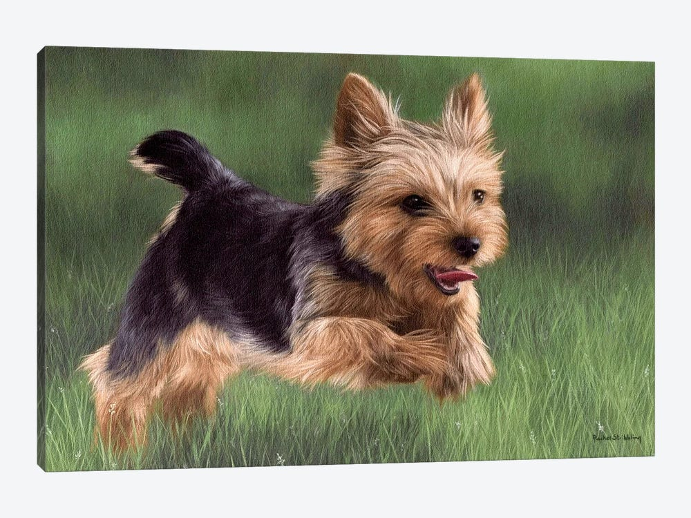 Yorkshire Terrier by Rachel Stribbling 1-piece Canvas Art