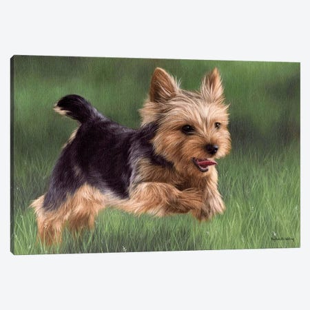 Yorkshire Terrier 3-Piece Canvas #SLG57} by Rachel Stribbling Canvas Art