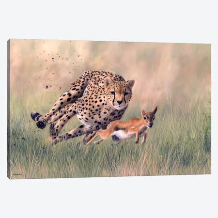 Cheetah And Baby Gazelle Canvas Print #SLG59} by Rachel Stribbling Canvas Art Print