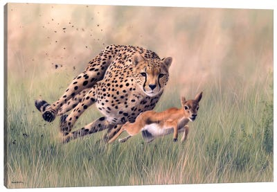 Cheetah And Baby Gazelle Canvas Art Print