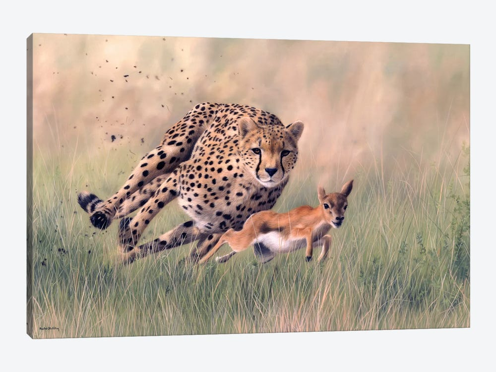 Cheetah And Baby Gazelle by Rachel Stribbling 1-piece Canvas Wall Art