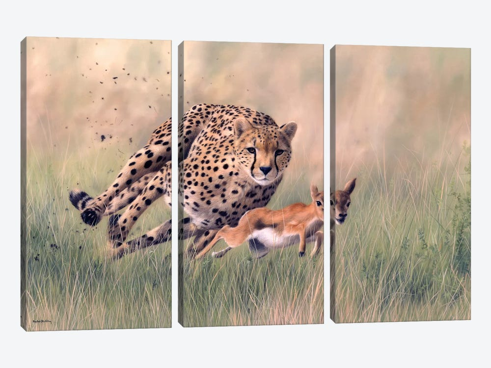 Cheetah And Baby Gazelle by Rachel Stribbling 3-piece Canvas Artwork