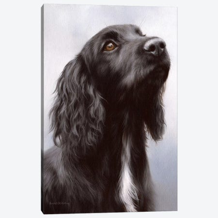 Cocker Spaniel Canvas Print #SLG60} by Rachel Stribbling Canvas Wall Art
