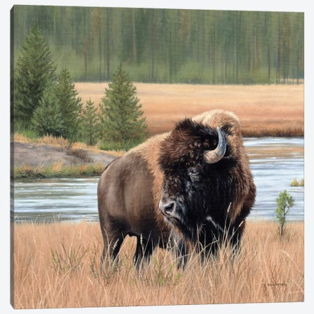 American Bison Landscape Canvas Print #SLG62} by Rachel Stribbling Canvas Wall Art
