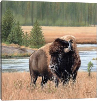 American Bison Landscape Canvas Art Print