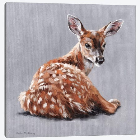Annabelle Canvas Print #SLG63} by Rachel Stribbling Canvas Art