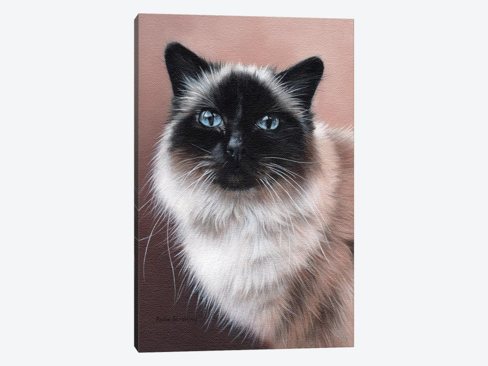 Birman by Rachel Stribbling 1-piece Canvas Artwork