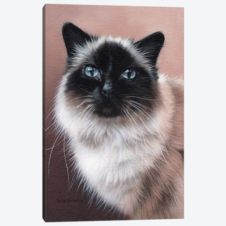 Birman Canvas Print #SLG64} by Rachel Stribbling Canvas Print