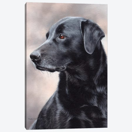 Black Labrador Canvas Print #SLG65} by Rachel Stribbling Canvas Print