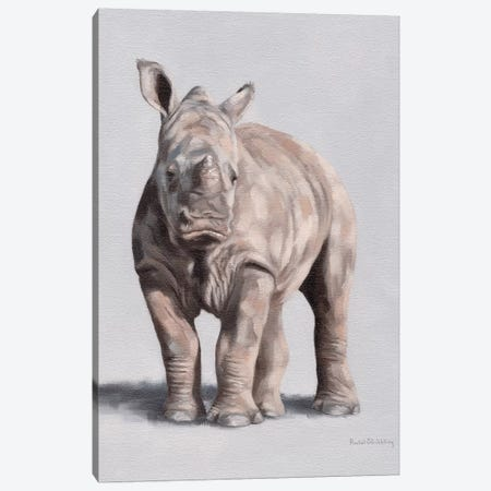 Daisy Canvas Print #SLG66} by Rachel Stribbling Art Print