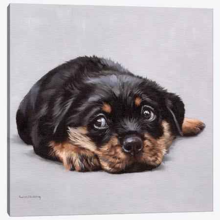 Dexter Canvas Print #SLG68} by Rachel Stribbling Canvas Wall Art
