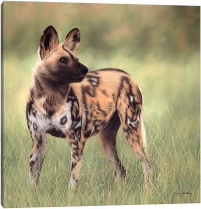 African Wild Dog Canvas Art Print
